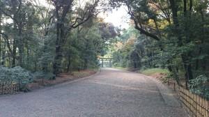 明治神宮 南参道 (1)