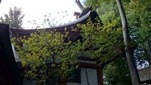 北澤八幡宮 本殿