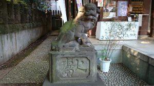北澤八幡宮 狛犬 (1)