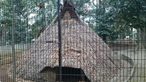 代々木八幡神宮 遺跡