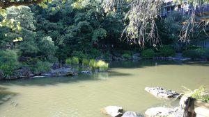東郷神社 神池・庭園 (4)
