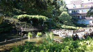 東郷神社 神池・庭園 (3)