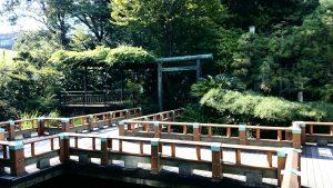 東郷神社 神池・庭園 (1)
