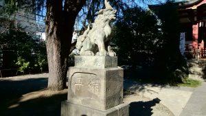 青山熊野神社 狛犬 (1)