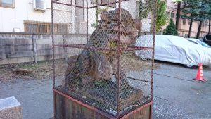 今戸神社 文政5年狛犬 (2)