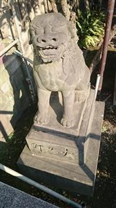 富岡八幡宮 狛犬 (2)