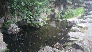 中目黒八幡神社 神池