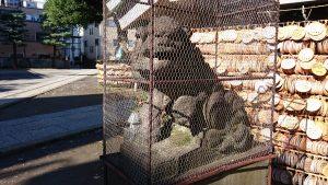 今戸神社 文政5年狛犬 (1)