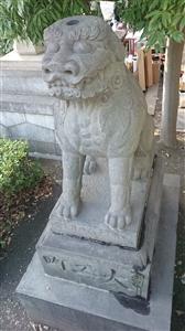 富岡八幡宮 狛犬 (1)