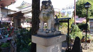 今戸神社 拝殿前狛犬 (2)