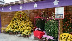湯島天満宮の菊まつり (2)