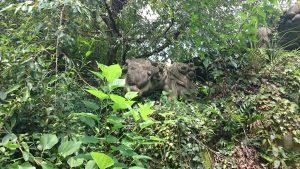 玉川神社 石獅子 親 (左)