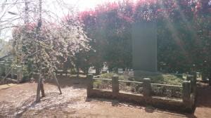 尾山台宇佐神社 境内桜