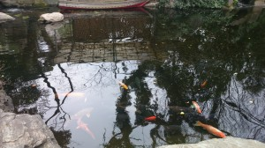 (芝)愛宕神社 池の鯉
