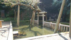 鹿島神宮 御手洗池 (1)