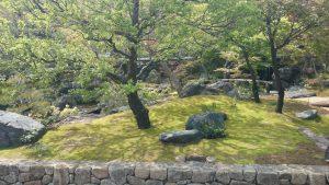湯島天神 梅園 (2)