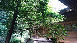玉川神社 本殿