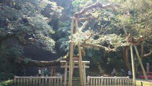 鹿島神宮 御手洗池 (3)