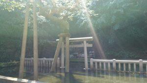 鹿島神宮 御手洗池 (2)