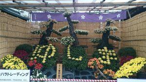 湯島天満宮の菊まつり (4)