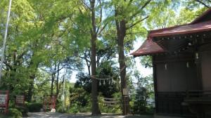 多摩川浅間神社 夫婦銀杏