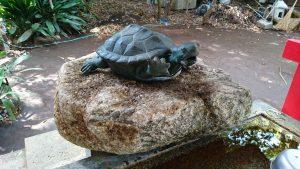 赤堤六所神社 手水舎の亀