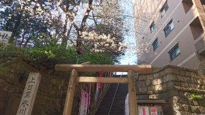 上目黒氷川神社 表参道石段の桜