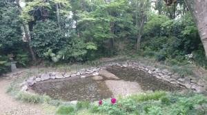 鷲宮神社 光天之池