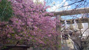 元三島神社の河津桜と鳥居