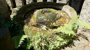 御嶽神社 杜の霊神水(3)