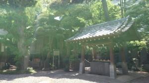 廣尾稲荷神社 御神木