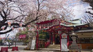 居木神社拝殿前の桜