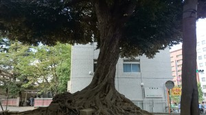 花園神社 樹木
