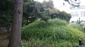 井草八幡宮 浅間神社 (2)
