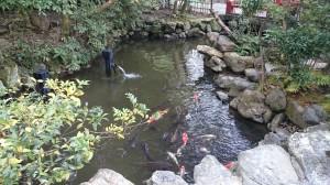 猿田彦神社 神池