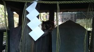 雪ヶ谷八幡神社 猿田彦さんと猫