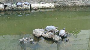 磐井神社 笠島弁天社 池の亀