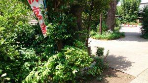 鷺宮八幡神社 狛犬 吽