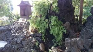 南大井水神社 泉