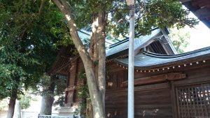 西高井戸松庵稲荷神社 本殿 (1)