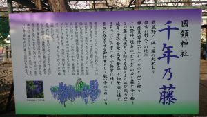 国領神社 千年乃藤由緒書き