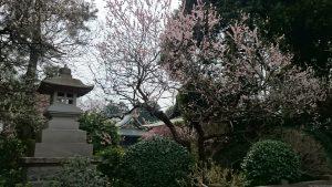 喜多見氷川神社 神苑(梅林) (1)