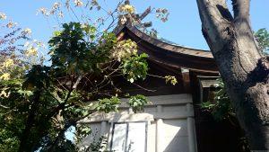 三谷八幡神社 本殿