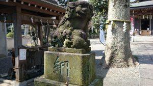 調布青渭神社 狛犬 (1)