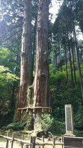 御岩神社 三本杉 (2)