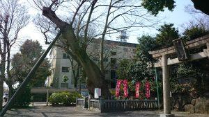 調布青渭神社 神木の大ケヤキ