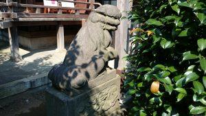 徳丸北野神社 狛犬 (1)