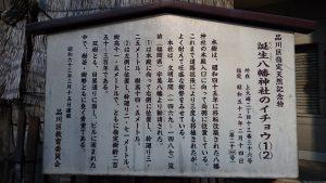 誕生八幡神社 誕生八幡神社のイチョウ(1)(2)・品川区指定天然記念物