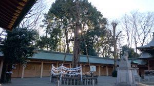 荻窪八幡神社 道灌槇(御神木)