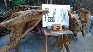 天沼熊野神社 出世杉の根